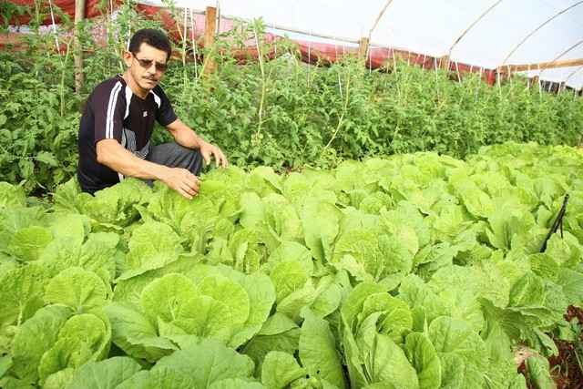 Produção de hortaliças na região de Dourados tem sido fomentada visando já o abastecimento da Ceasa - Foto: A. Frota