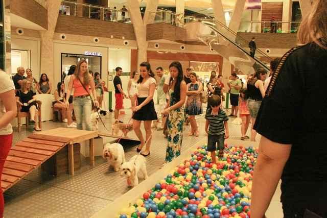 Evento de diversão entre cães e donos, Parque Pet encerra neste final de semana - Assessoria