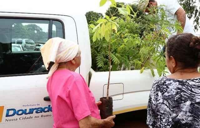 Haverá no local a distribuição de mudas de árvores frutíferas e nativas - Foto: Assecom/arquivo