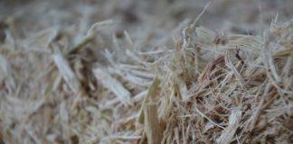 Bagaço da cana é rico em açúcares - Foto: Goreti Braga