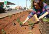 Florista Priscila Azambuja acompanha de perto o trabalho de plantio de flores – Foto: A. Frota