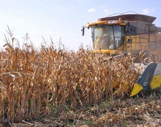 Maior parte das lavouras já estão prontas para colheita e não serão afetadas pelas geadas - Divulgação