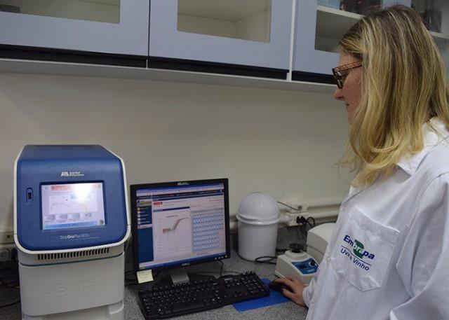 Verificação de dados da expressão genética em termociclador de tempo real - Foto: Viviane Zanella