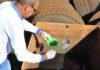 Ações de combate aos focos do Aedes aegypti reduziram drasticamente casos de dengue em Dourados – Foto: A. Frota/Arquivo