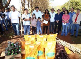 Durante a manhã desta segunda-feira a prefeita participou do plantio de mudas de mandioca em propriedade da aldeia - Foto: A. Frota