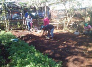 Horta cultivada por alunos no contexto dos projetos de resgate da cultura na Reserva Indígena - Divulgação