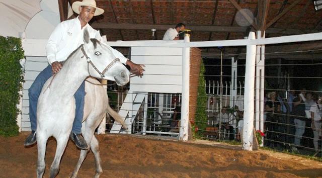 Cavalo pantaneiro terá leilão no dia 23, com participação de animais de Mato Grosso do Sul e Mato Grosso - Foto: Sílvio Andrade