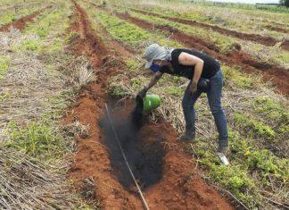 Biocarvão, ou biochar, é feito de pó de serra, restos vegetais, cama de frango e lixo urbano, e é usado como condicionador de solo - Foto: Fabiana Rezende