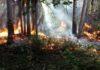 Incêndio que começou na última sexta-feira,13, já atinge uma grande área do Parque - Foto: Reginaldo Oliveira