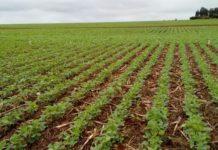 Estimativa da Aprosoja/MS é que o Estado tenha área de 2,5 milhões de hectares de soja plantadas e alcance volume de grãos de 8,3 milhões de toneladas -Divulgação