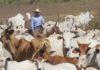 Segmento rural foi um dos principais responsáveis pelo aumento das contratações pelo FCO - Divulgação