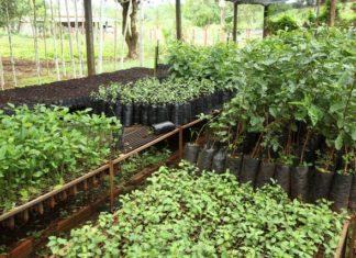 Investimento tem como finalidade incentivar os pequenos produtores no mercado agrícola – Foto: A. Frota
