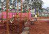 Trabalhos começam com a implantação do canteiro de obras e instalação de estrutura de apoio aos operários - Foto de Ricardo Minella