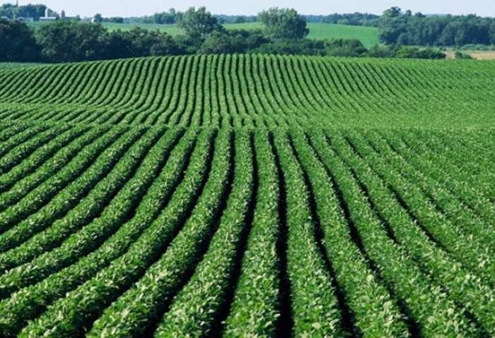 Resultado de imagem para Evento na Hungria mostra potencial da agricultura brasileira